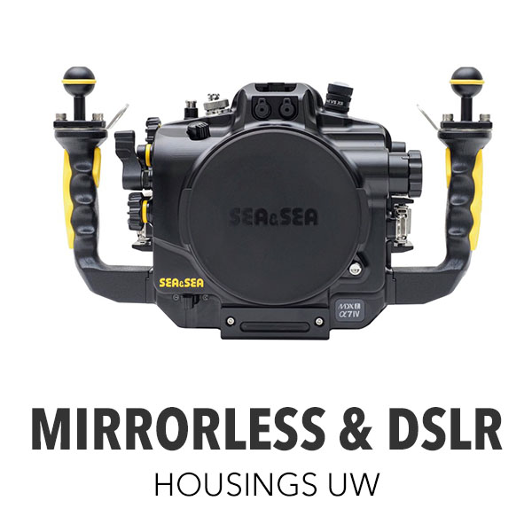 Mirrorless & DSLR [All]
