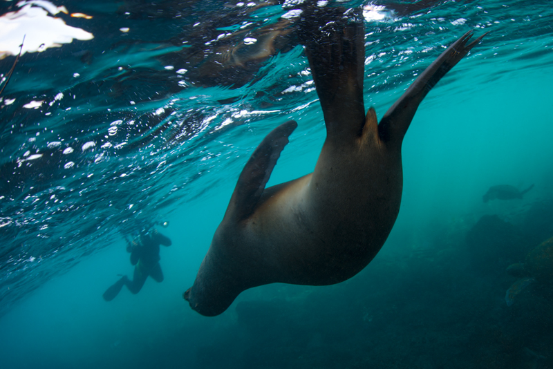 ©Magnus Lundgren - Photographer and fur seal - Galapagos
