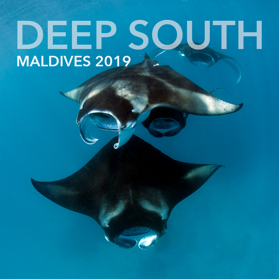 Deep South Expedition March 2019