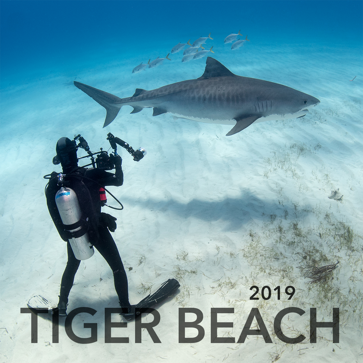 Tiger Beach Expedition Feb 2019